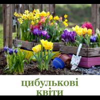 Цибулькові квіти