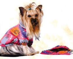 Демисезонная куртка из болоньи Pet Fashion Бетти