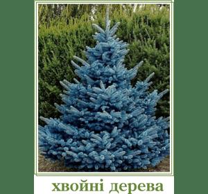 Хвойні дерева