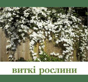 Виткі рослини