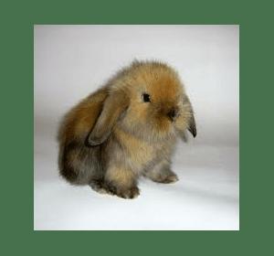 декоративні кролики