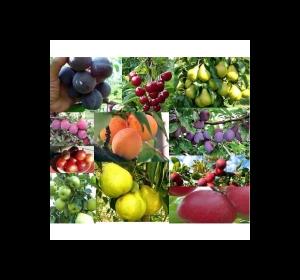 Плодові дерева