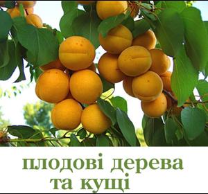 Плодові дерева та кущі