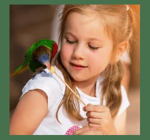 Здоровое питание декоративных птиц