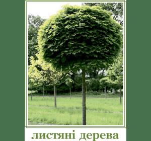 Листяні дерева