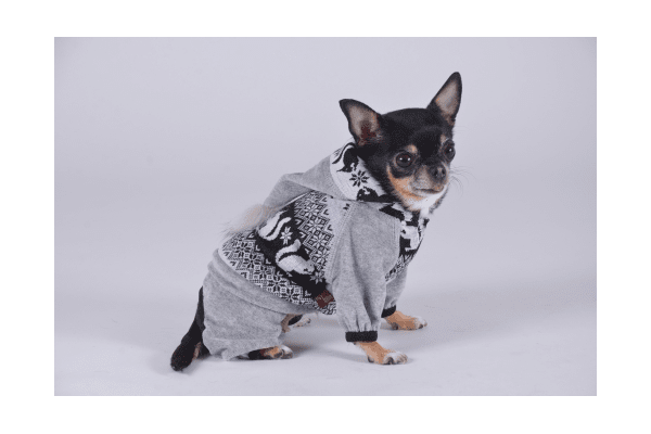 Pet Fashion Костюм Бьюти XS - NaVolyni.com