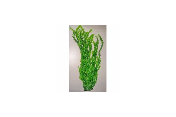 Пластиковое растение для аквариума 047802 , 75-80 см - NaVolyni.com