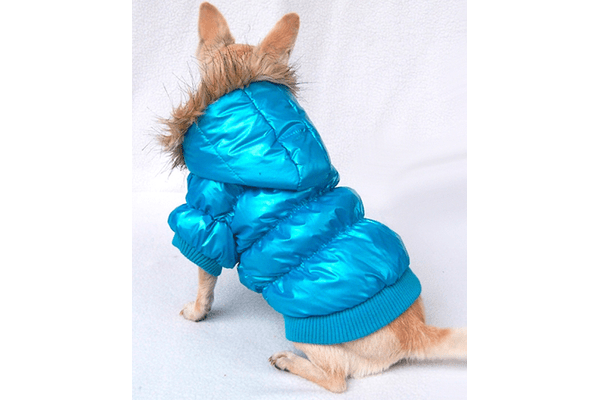 Free Dogs курточка зимняя голубая S - NaVolyni.com